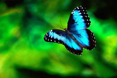 St. Maarten Combo Tour: Butterfly Farm and Orient Bay